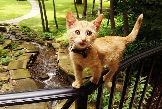 cat-biker-saves-kitten-pat-doody-13