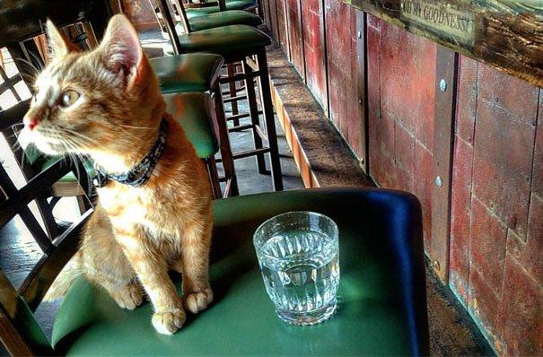 cat-biker-saves-kitten-pat-doody-16