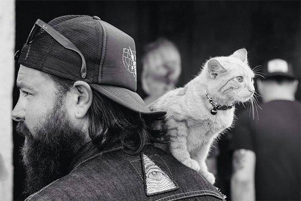 cat-biker-saves-kitten-pat-doody-21