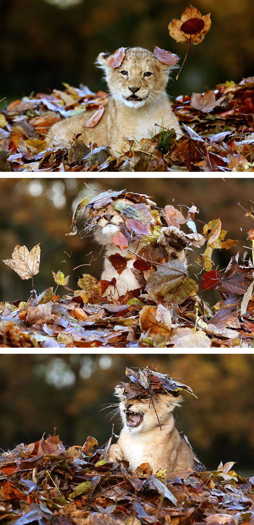 autumn-animals-wcth01