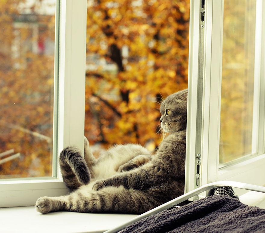 autumn-animals-wcth05
