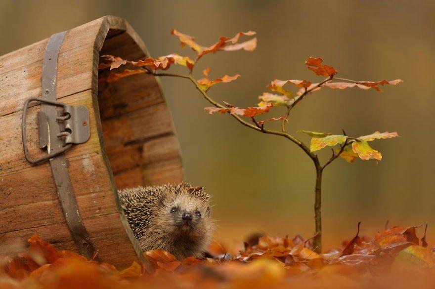 autumn-animals-wcth11