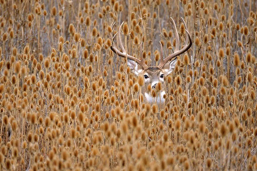 autumn-animals-wcth12