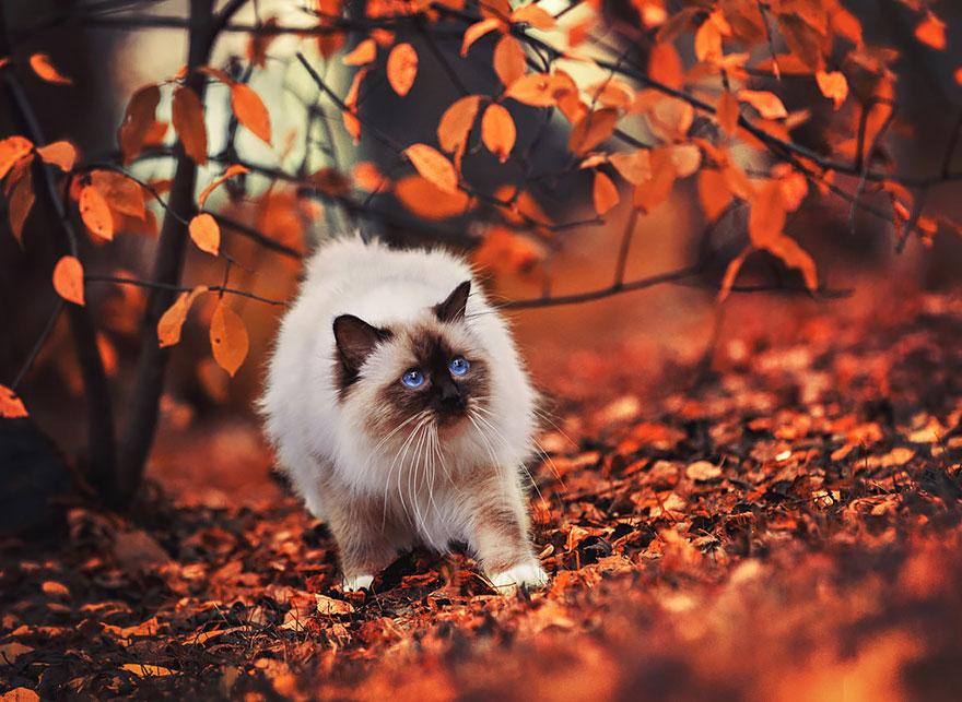 autumn-animals-wcth14