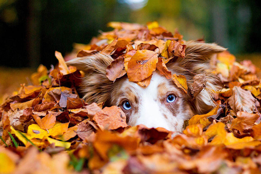 autumn-animals-wcth16