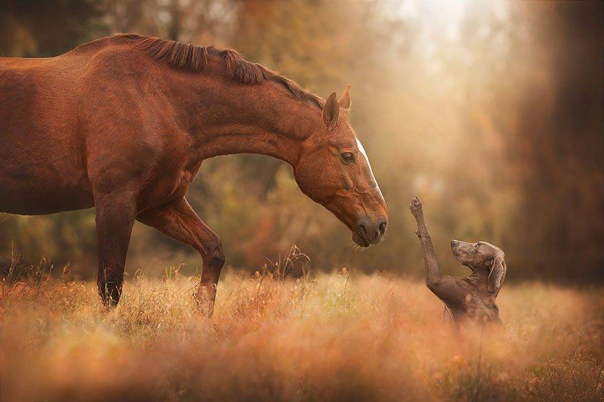 autumn-animals-wcth18