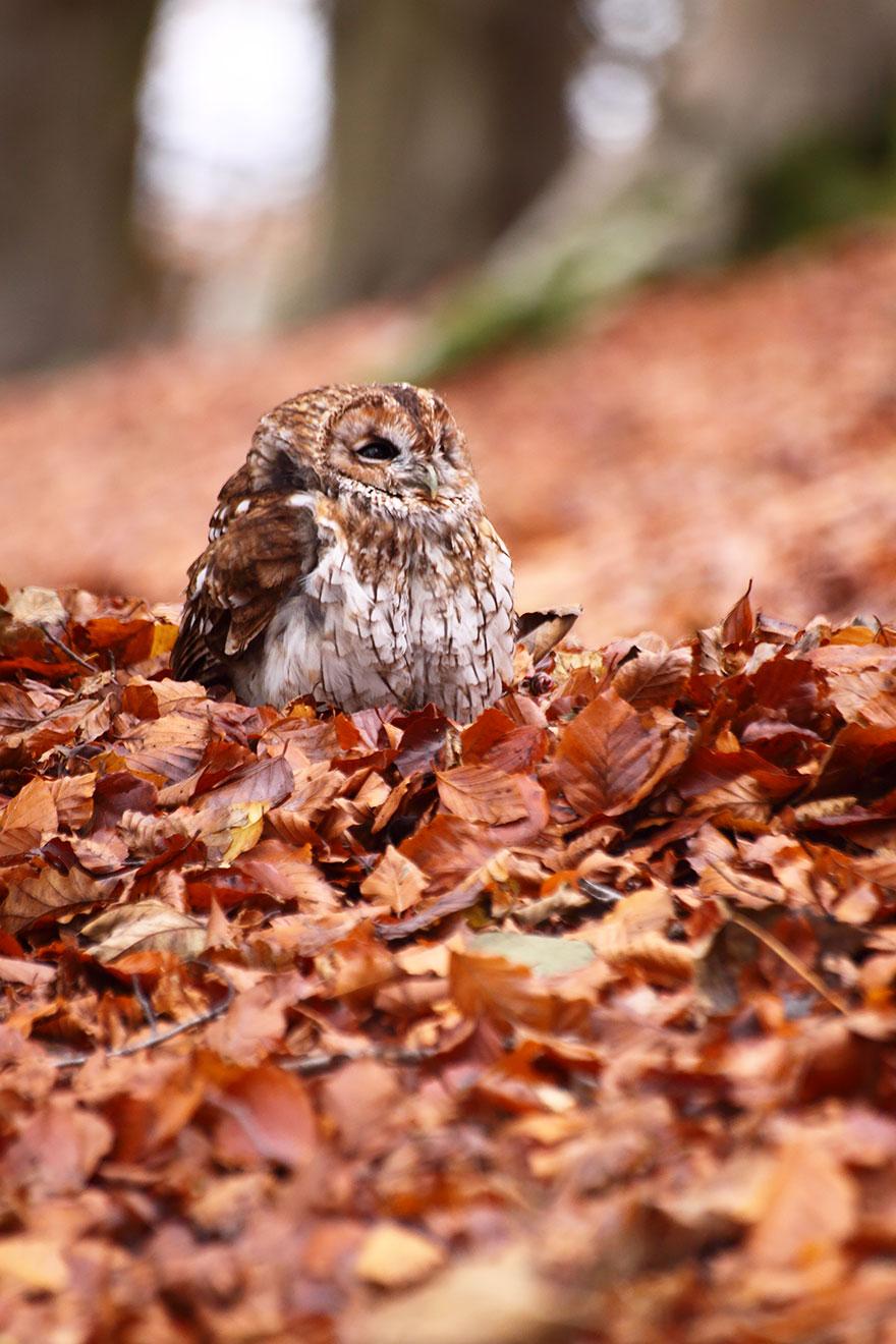 autumn-animals-wcth19