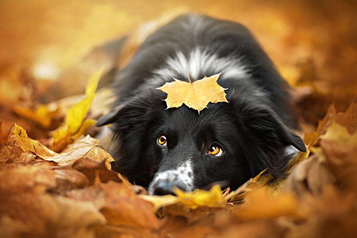 Осень и животные