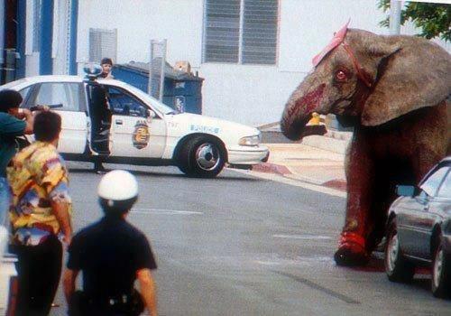 Слоны в цирке