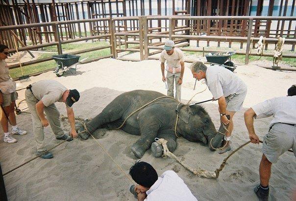 цирк с животными: слоненок