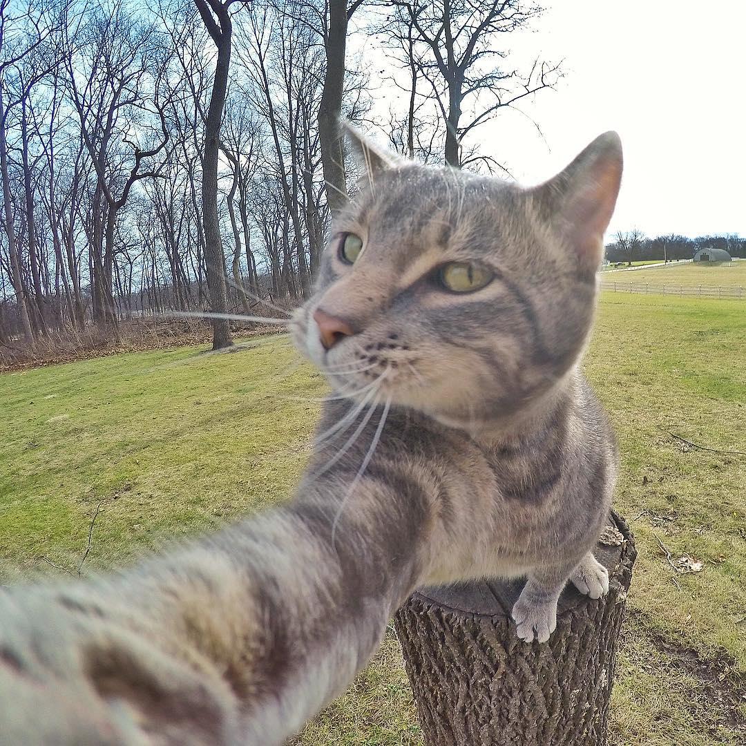 Кот делает селфи
