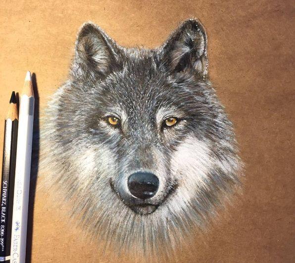 рисонок волка