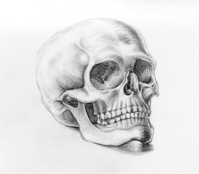 Анатомия в рисовании