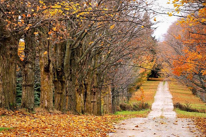 Деревься осенью