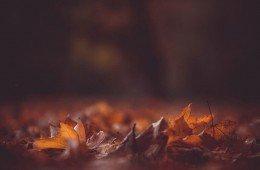 Деревья сбрасывают листья осенью