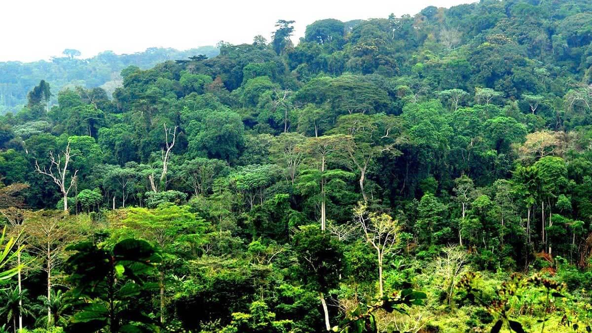 Бассейн Конго в Африке