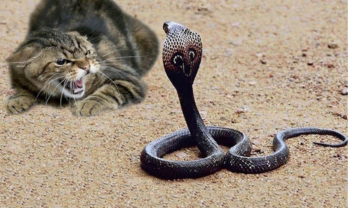 кошка и змея