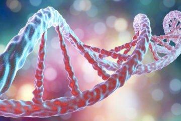 Ученые изобрели устройство для регенерации ампутированных конечностей