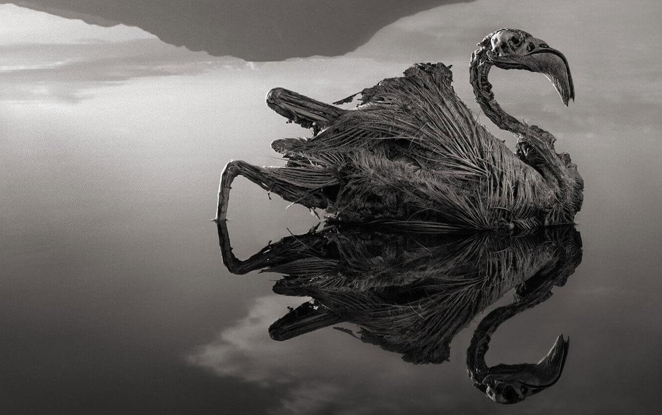 «Каменные животные» озера Натрон