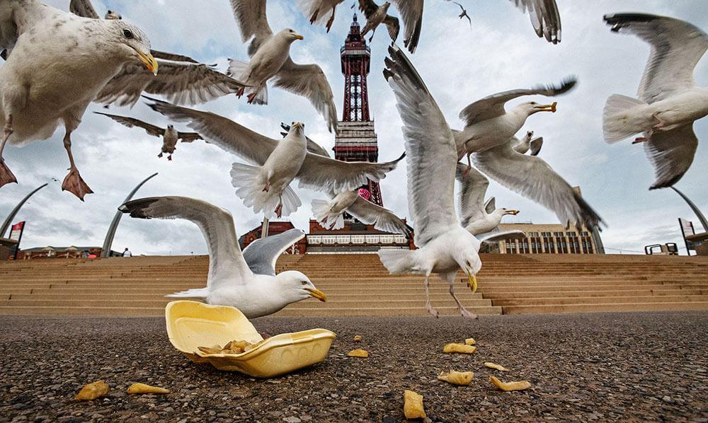чайки в городе