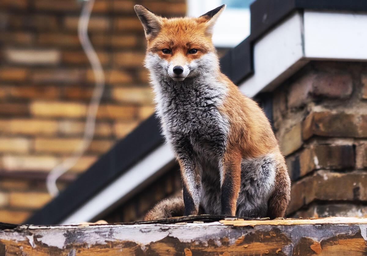 дикие животные в городе
