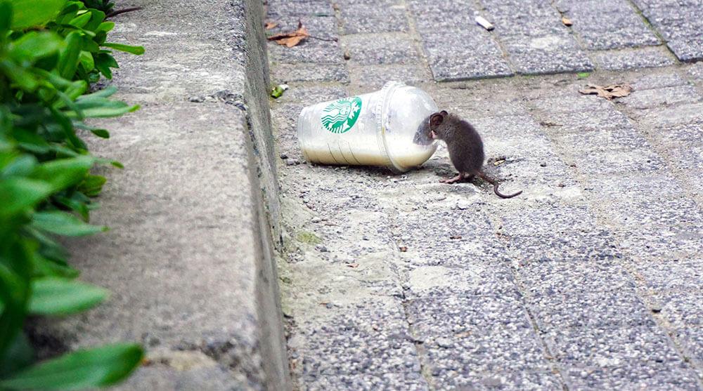мышь в городе