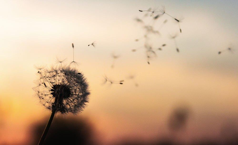 изменение климата влияет на аллергию