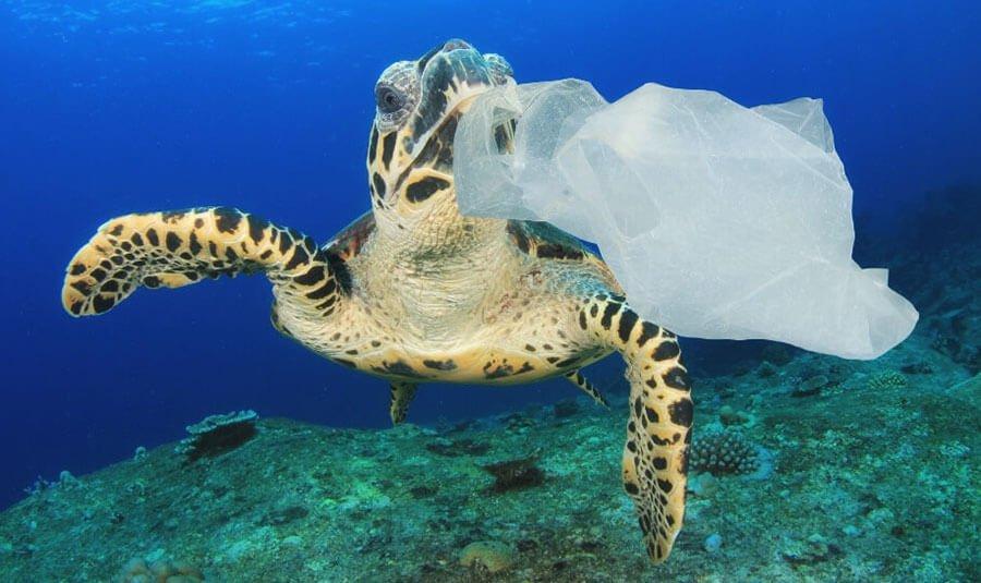 черепаха и пластиковый пакет в океане