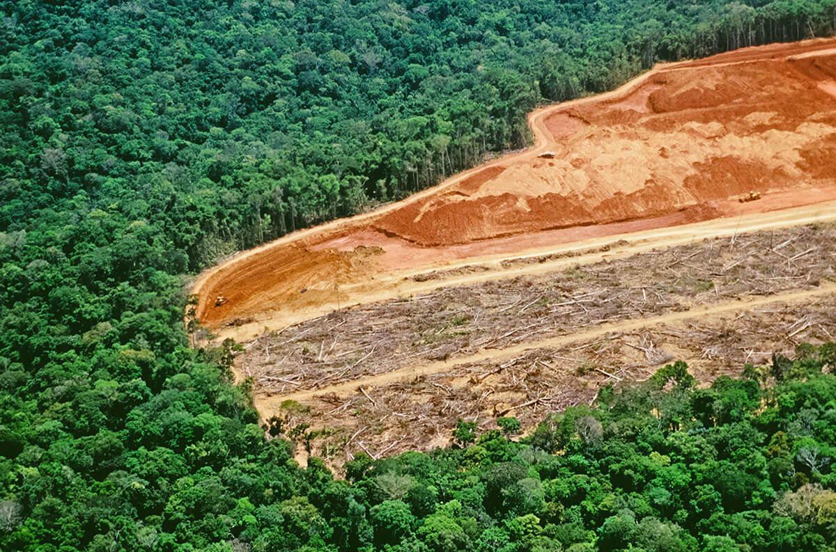 Вырубка дождевых лесов