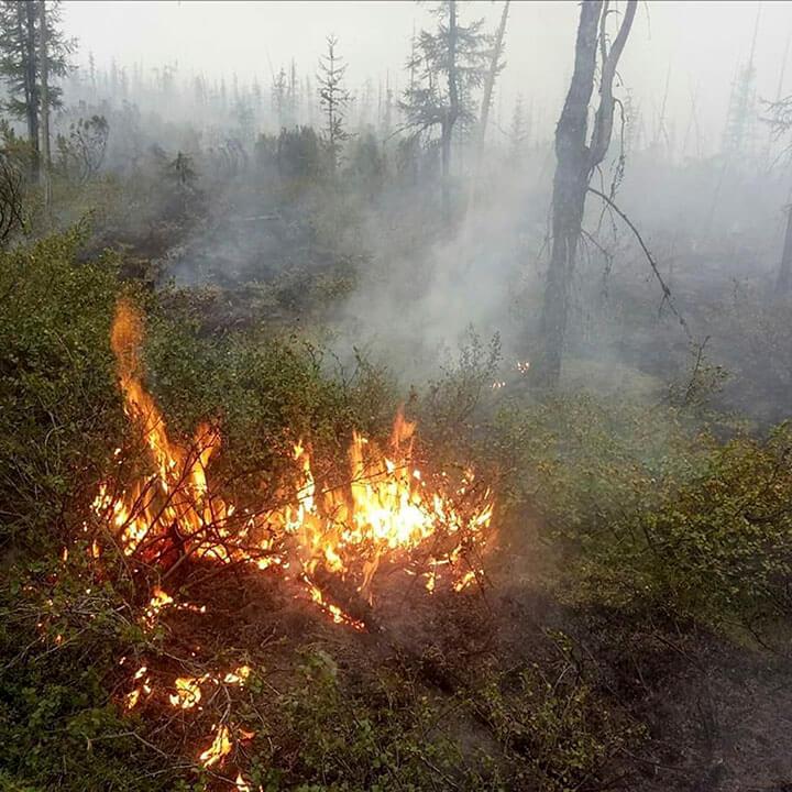 Подар в лесах Сибири