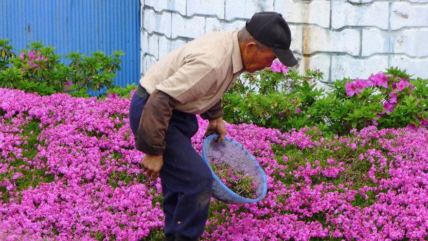 мужяина сажает цветы своей жене