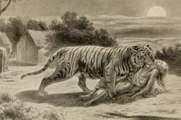 Чампаватская тигрица, рисунок