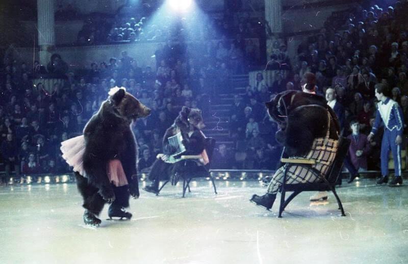 Шоу медведи на льду