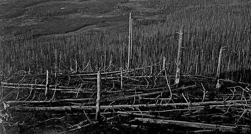 лес после тунгусского метеорита