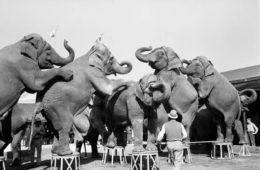 нападение животных в цирке