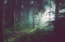 самые таинственные леса