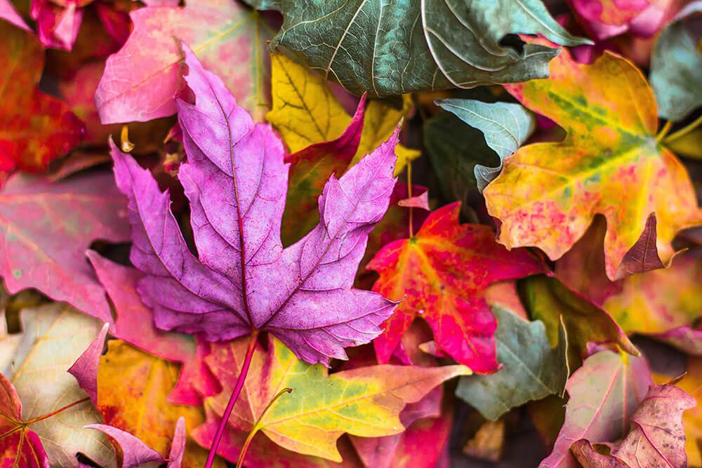яркая осенняя листва