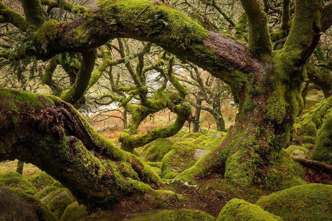 жуткие истории про лес
