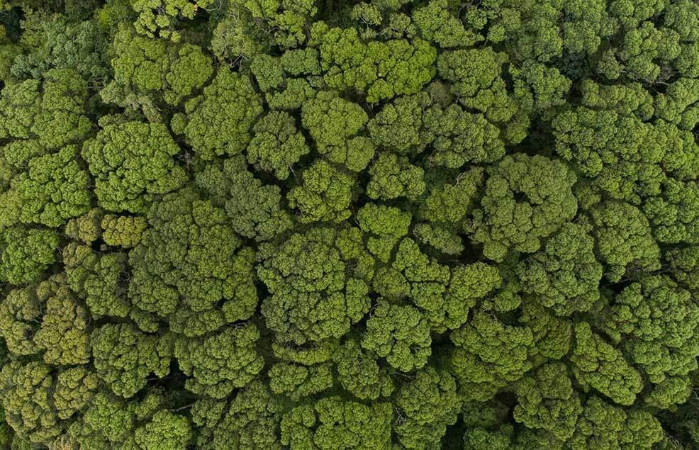 кроны деревьев вид сверху
