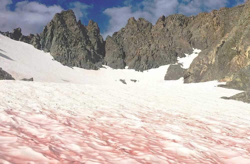 факты о зиме: розовый арбузный снег