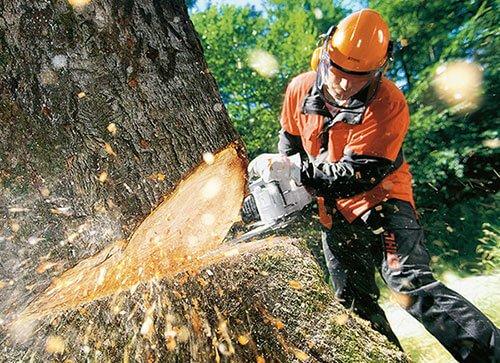 Вырубка леса влияет на глобальное потепление