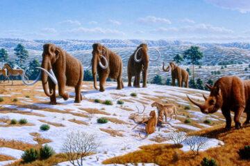 животные эпохи Плиоцен