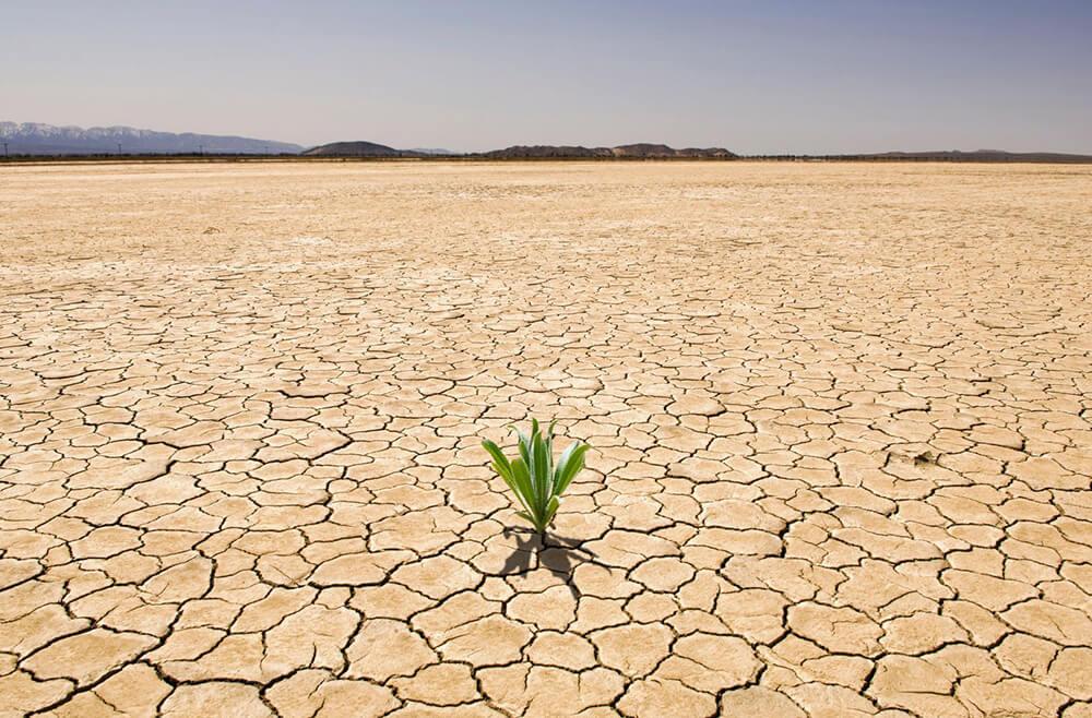 засуха - это последствие глобального потепления
