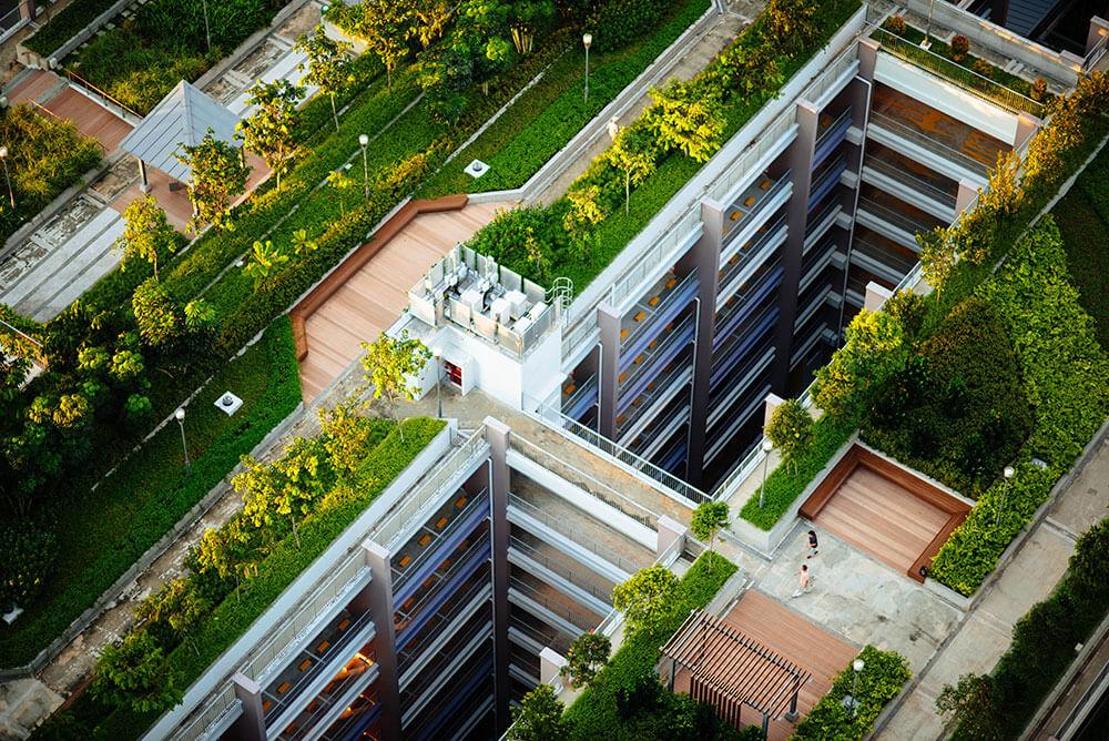деревья на крышах домов
