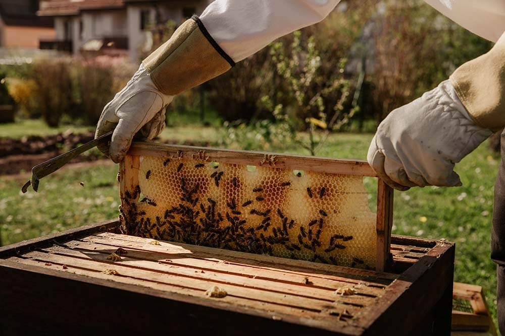 хобби пчеловодство