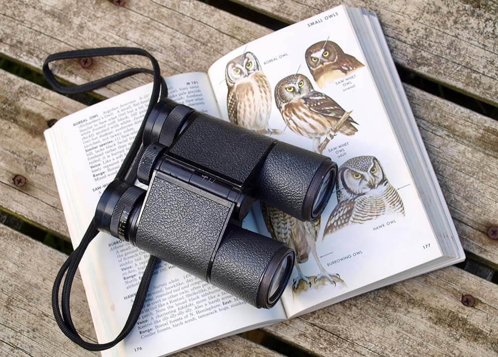 наблюдать за птицами в бинокль